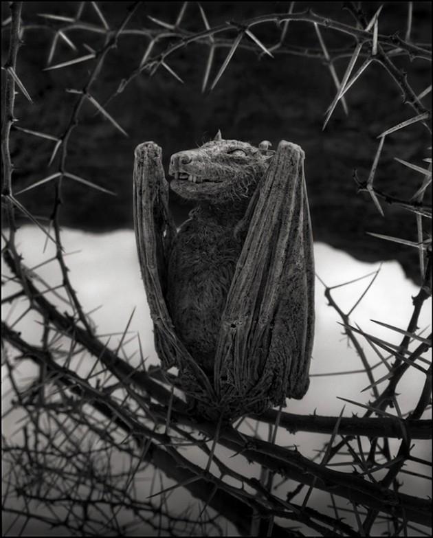 Calcified Bat