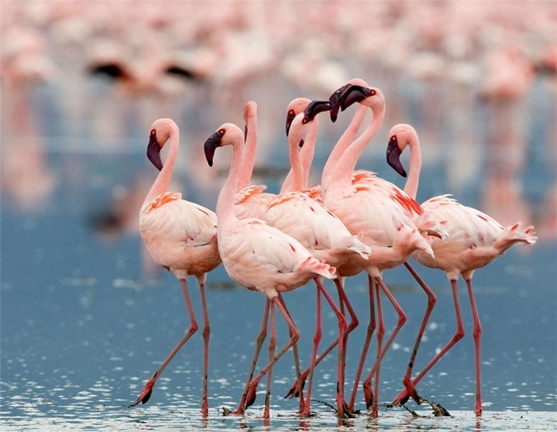 Amazing Kenya – Country Photography
