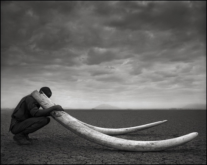 African Wild Life Photography