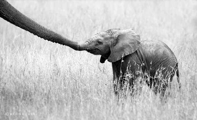 Wildlife Photography By Marina Cano